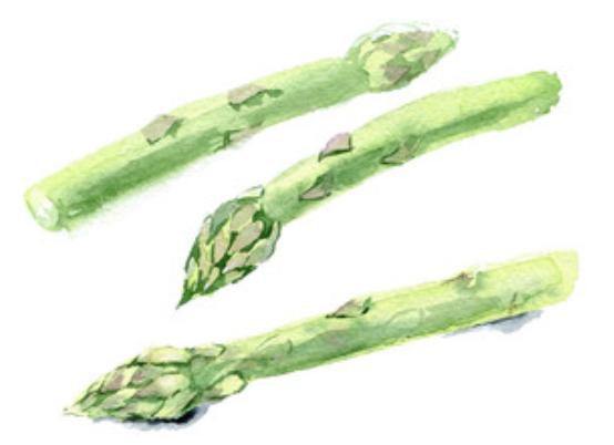 watercolor asparagus